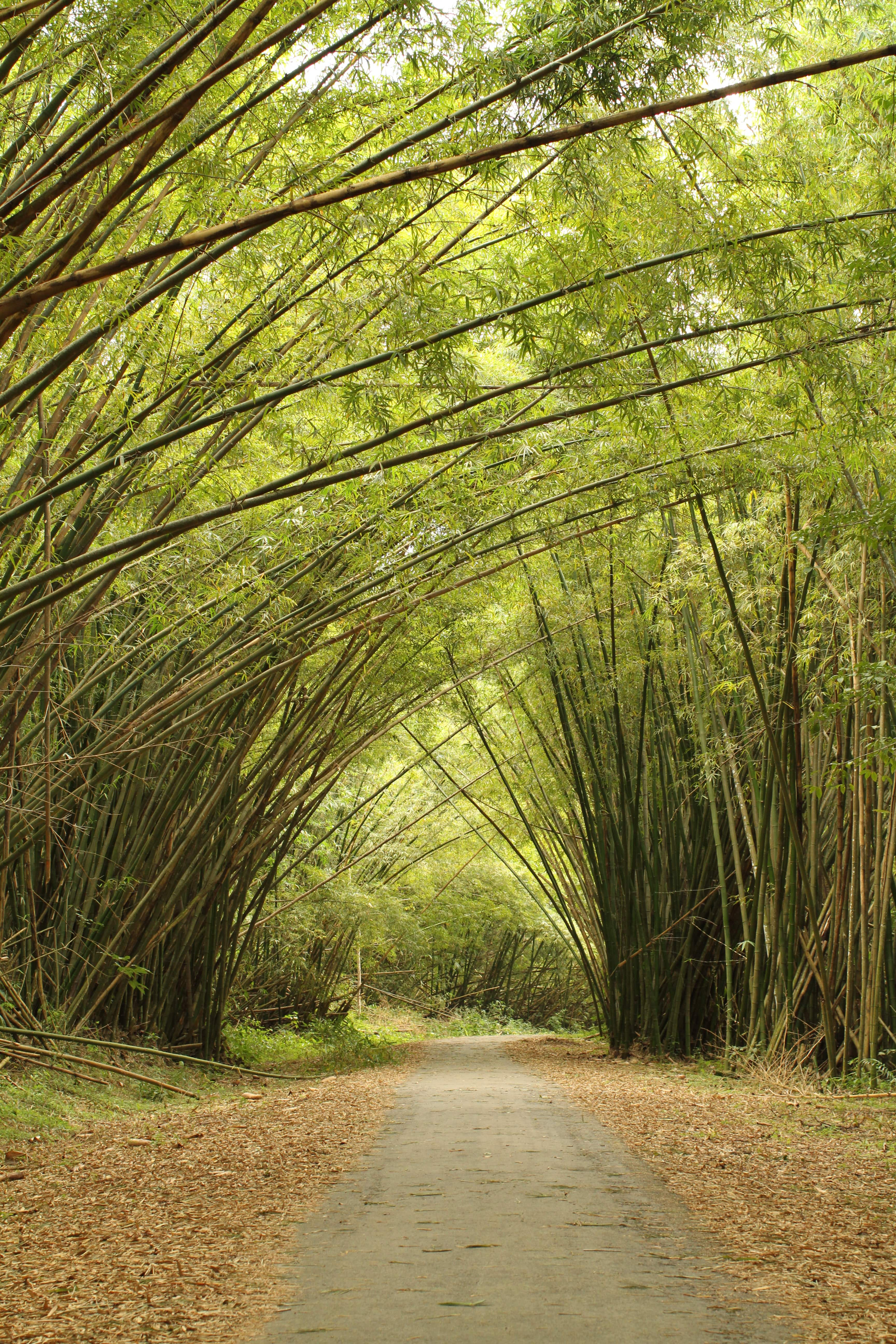 Bamboo Cathedral – Bessguide